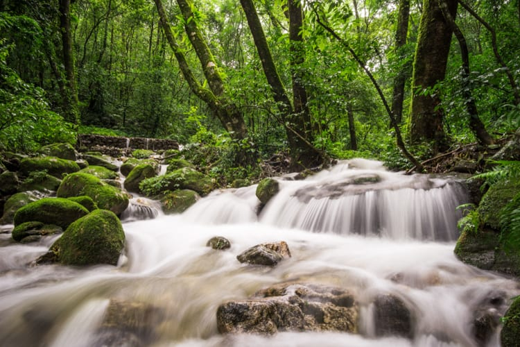 Shivapuri National Park