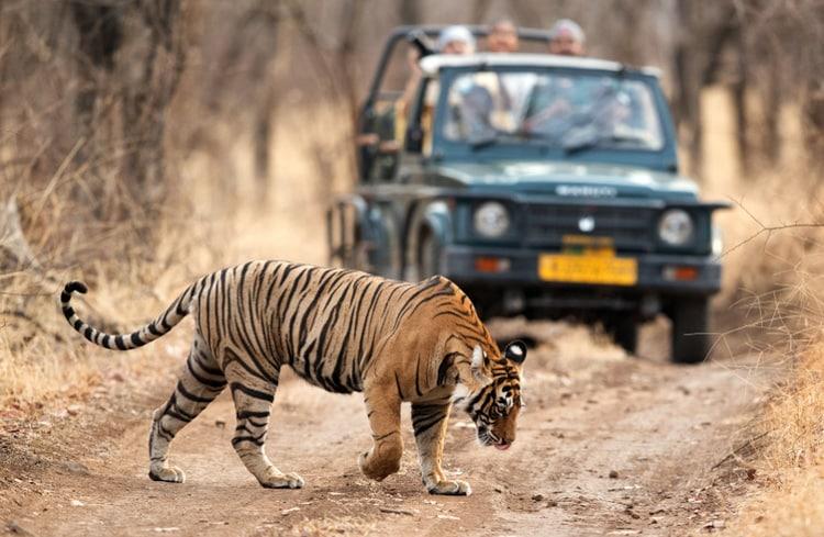animals in india