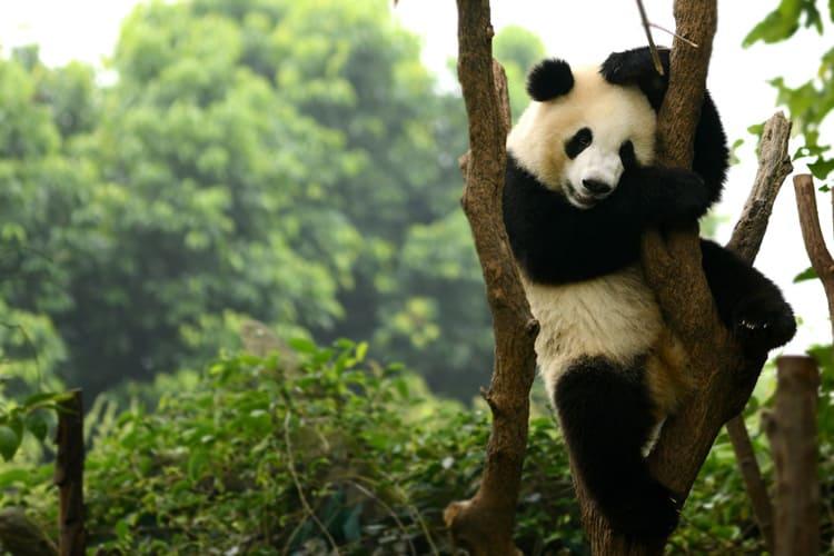 animals in china