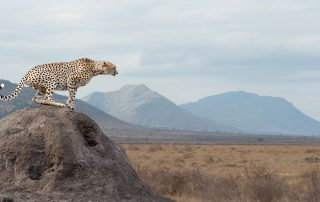 världens snabbaste djur