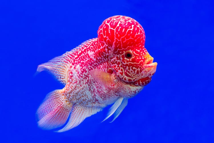 worlds most beautiful fishes