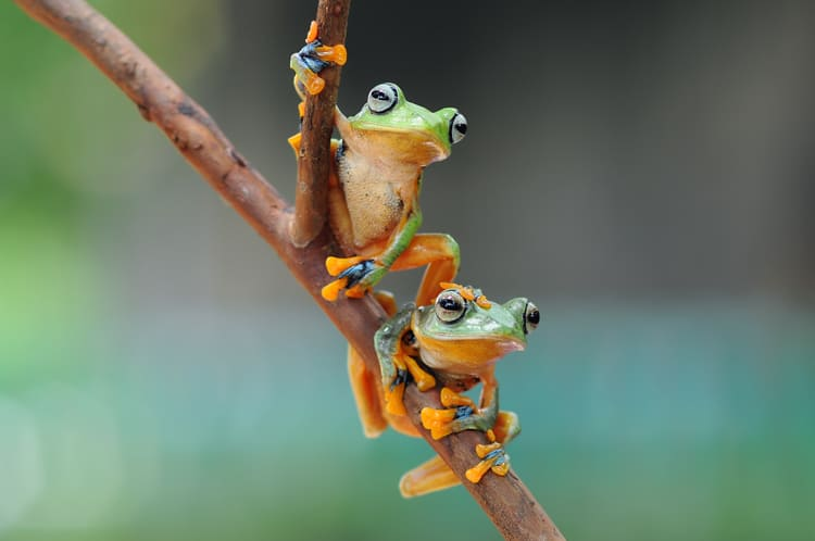 cool frogs